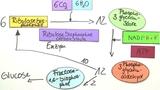 Photosynthese - Die lichtunabhängige Reaktion
