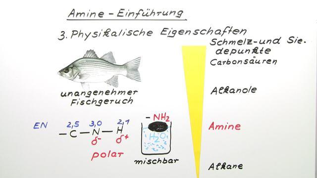 Amine – Aufbau und Eigenschaften