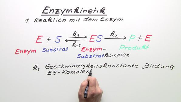 384 m106 enzymkinetik