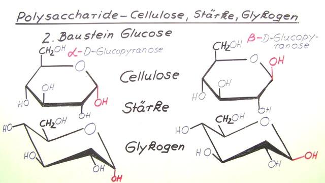 Polysaccharide – Cellulose, Stärke, Glykogen