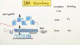 DNA - Verpackung und Chromatin