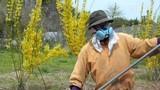 Atomkatastrophe in Fukushima - Konsequenzen für die Landwirtschaft