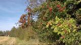 Die Hecke im Herbst