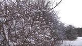 Die Hecke im Winter