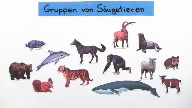 Säugetiere – Einteilung in Klassen und Gruppen