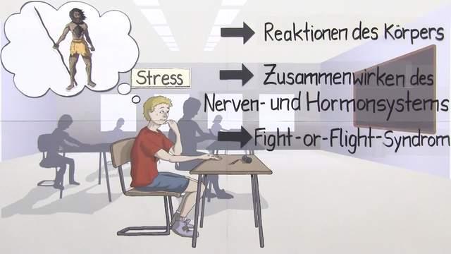 Fight-or-Flight-Syndrom – Zusammenwirken von Nerven- und Hormonsystem
