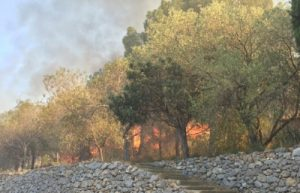 incendi a estagel 2