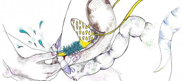 6.ditaprostataintero