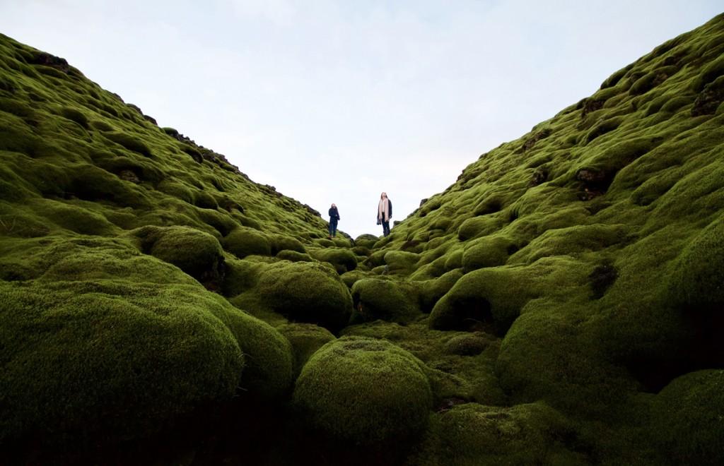 Un antic mar de lava cobert de molsa a Islàndia (fotografia: Dylan Shaw)