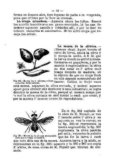Els enemics de l'olivera segons G. J. de Guillén-García.