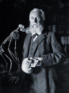 Les conferències d'Ernst Haeckel a Berlín se celebraren durant tres dies a l'abril del 1905 a la Sing-Akademie i van tenir un espectacular impacte públic. En elles, Haeckel va tractar la cinfrontació entre evolució i dogma, les evidències a favor d'una evolució humana dins dels primats i la controvèrsia sobre l'existència d'una ànima immortal.