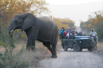 hoedspruit elephant