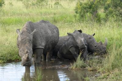 hoedspruit rhino