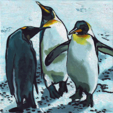 D352 pinguins