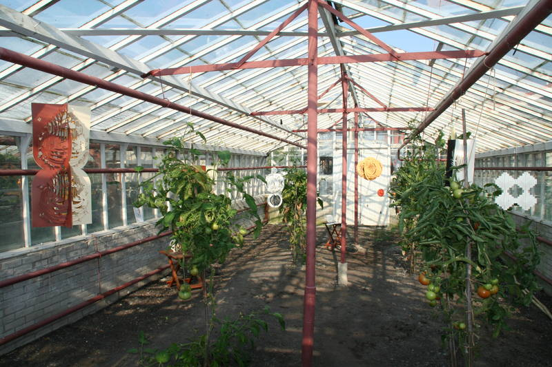 Greenhouse with tomatoes 3
