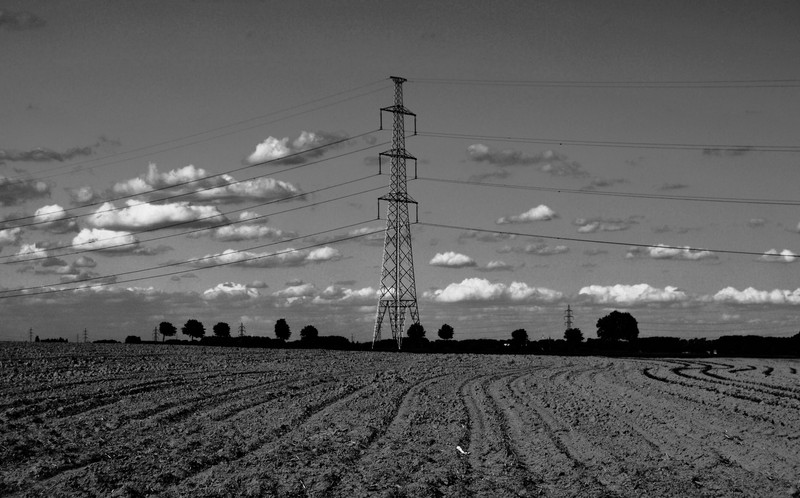 spring fields in B&W