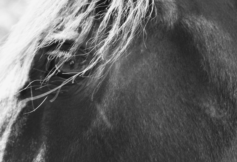 photographer in horse's eye
