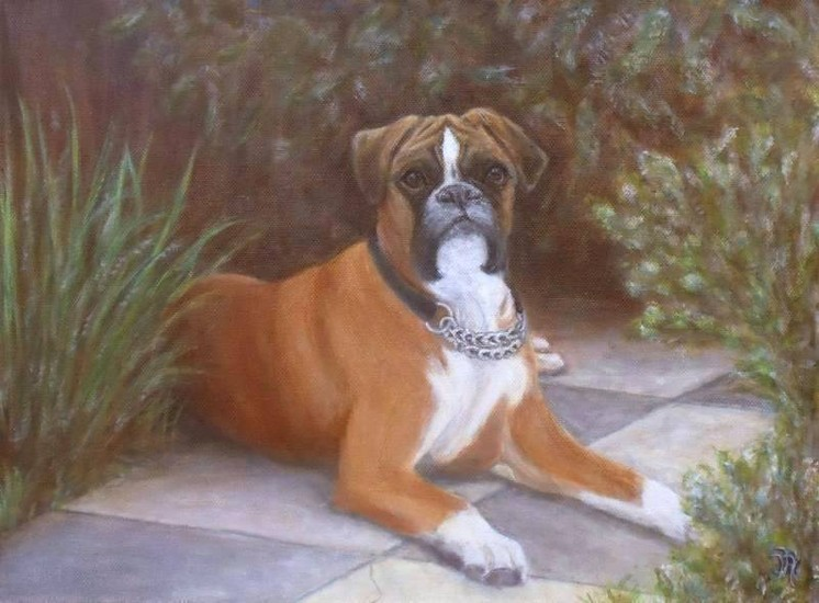 Hond boxer Ids