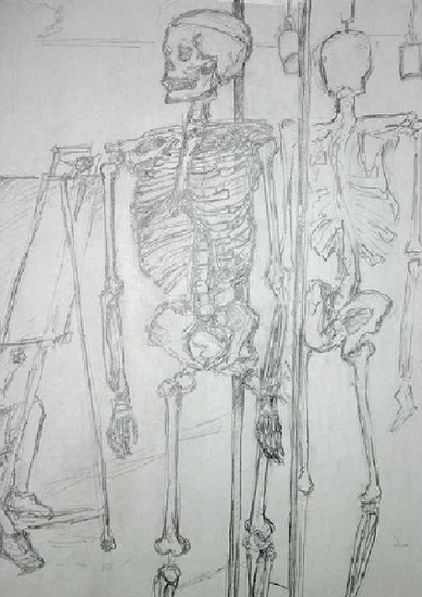 study of a skeleton
