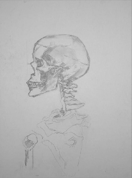 study of a womans skull