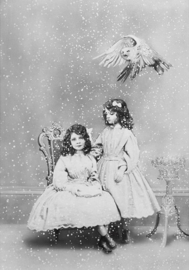 Sisters and snowy owl