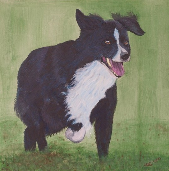 Willem, Border Collie