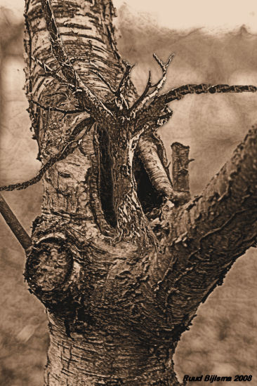 Big tree eats little one.