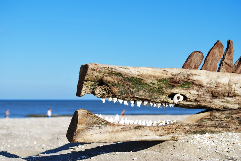 Driftwood sea-monster