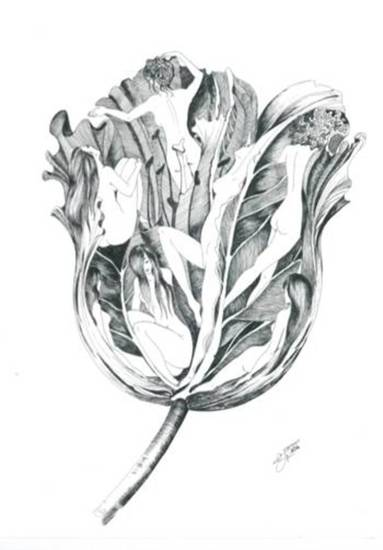 The beauty of the tulip