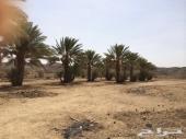 مزرعه بهجرة ليف محافظة العقيق منطقة الباحه
