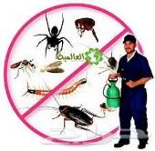 شركه مكافحه حشرات بالرياض