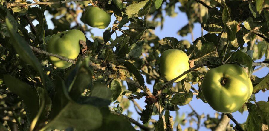Apple, oat and raisin crumble