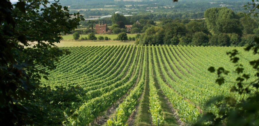 Best of English Wine for Summer Time