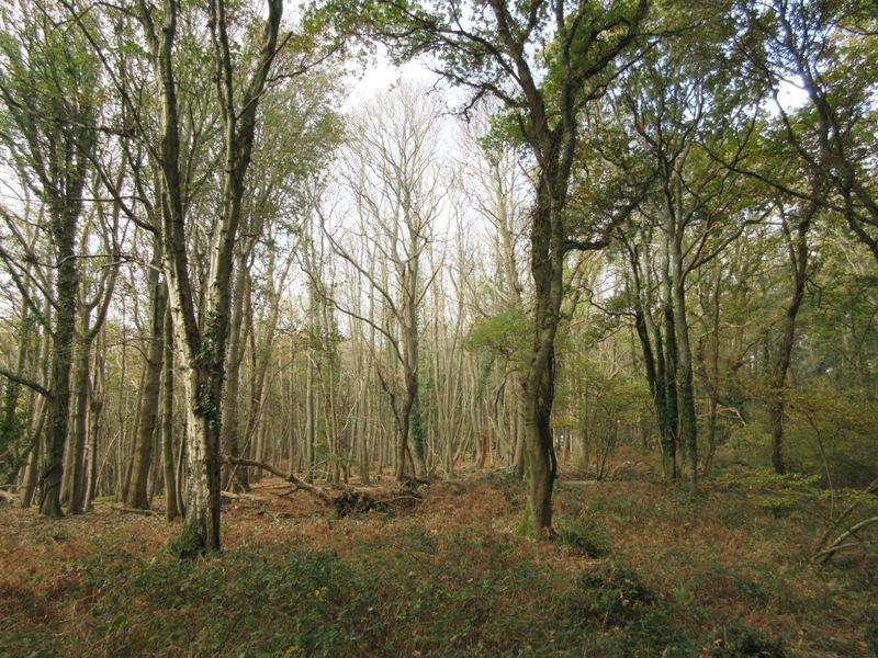 Land Commercial for sale in Luscombe, Dullar and Foxhole Woods, near Sturminster Marshall, Dorset BH21