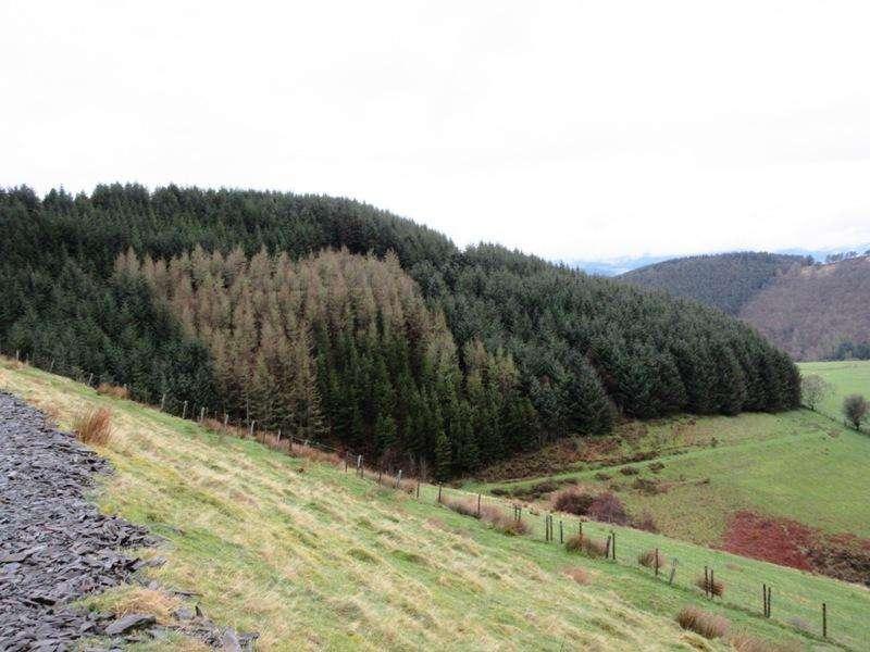 Land Commercial for sale in Cwm-Byr Woods, Aberhosan, Machynlleth, Powys SY20