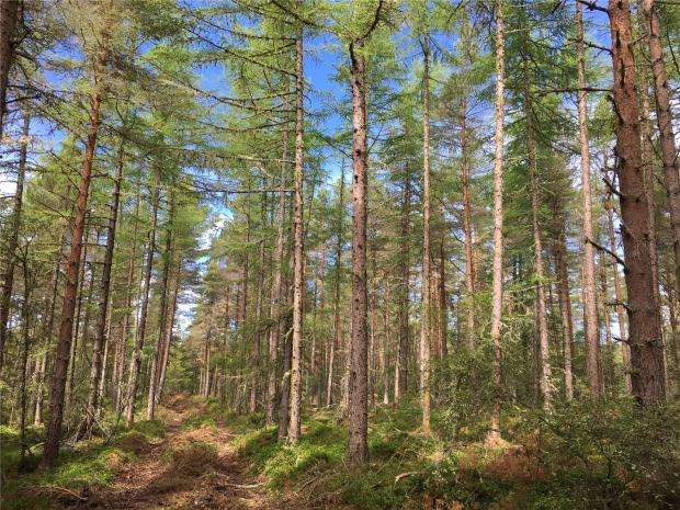 Land Commercial for sale in Marybank Wood, Lamington, Highland