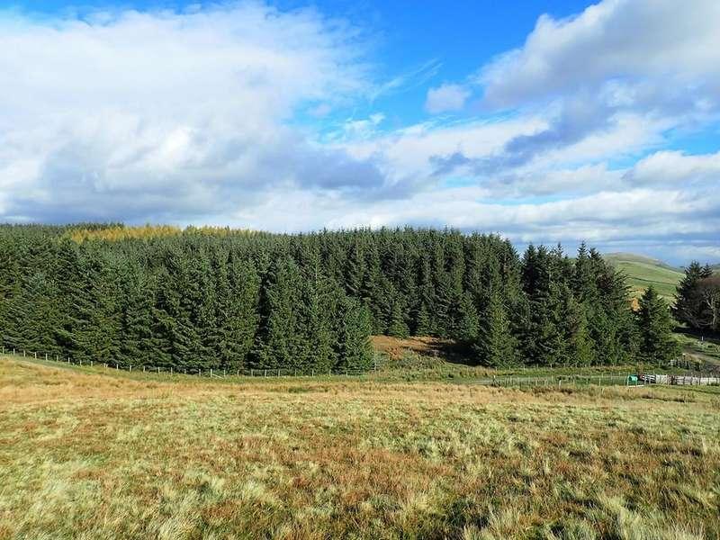 Land Commercial for sale in Cockley Moor Plantation, Dockray, Penrith, Cumbria CA11