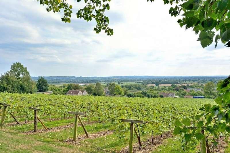 Land Commercial for sale in Wraxall, BA4 6RQ - Award winning vineyard; 11 acres; tasting room; delightful house