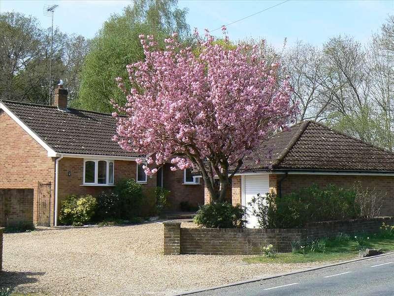 4 Bedrooms Bungalow for sale in Newbury Road, Andover