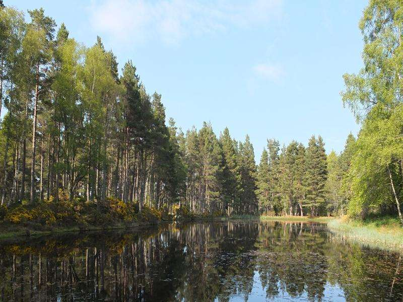 Land Commercial for sale in The Holme and Sawmill Woods, Near Inverness, Inverness-shire IV3