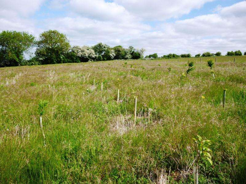 Land Commercial for sale in Gills Wood, Tattershall, Woodhall Spa LN4