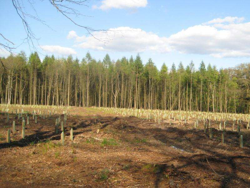 Land Commercial for sale in Weathermore Copse, Four Marks, near Alton, Hampshire GU34