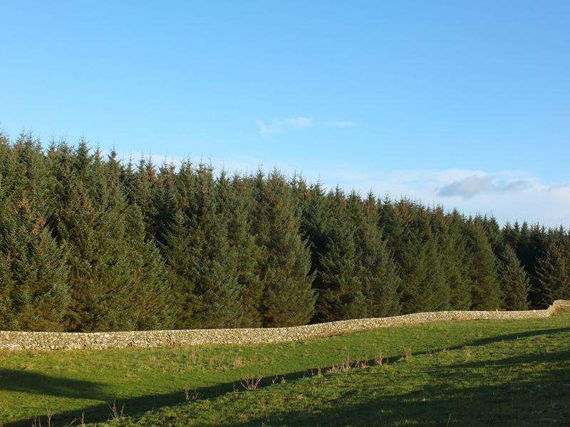 Land Commercial for sale in The Glenling Woods, Near Port William, Galloway DG8