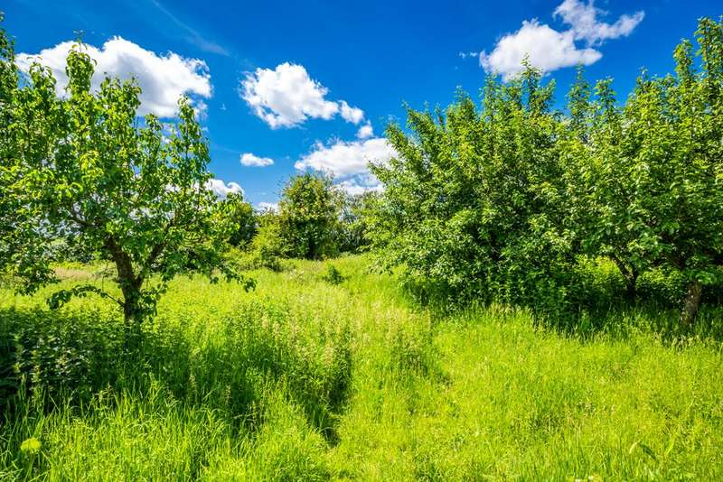 Plot Commercial for sale in The Orchard, Upper Basildon, RG8