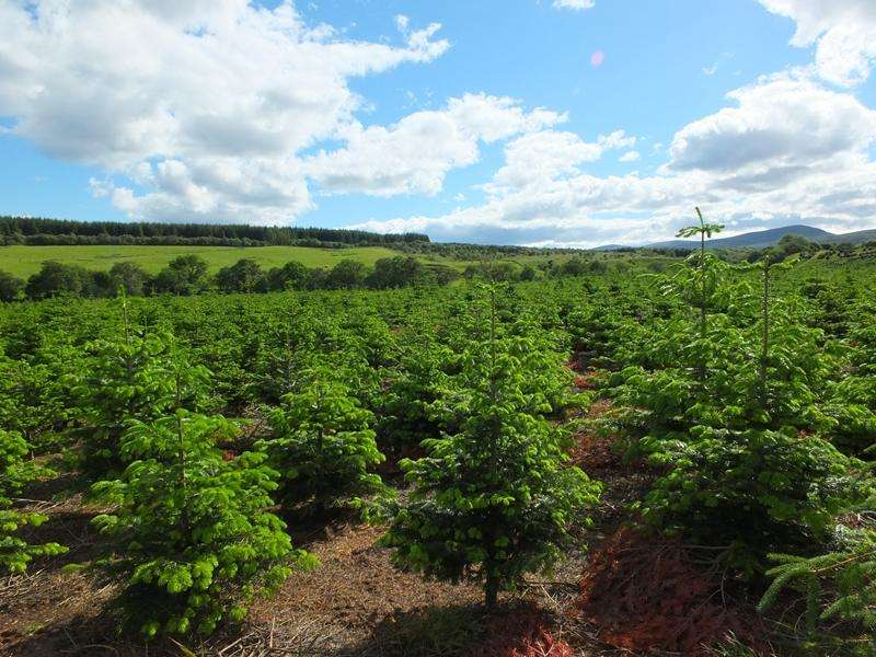 Land Commercial for sale in Balblair Farm Woodland, Edderton, Ross-shire IV19