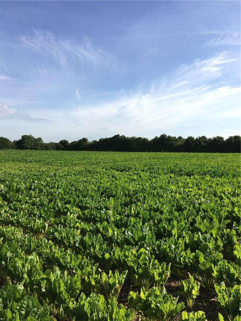 Land Commercial for sale in Sutton, Ely, Cambridgeshire, CB6