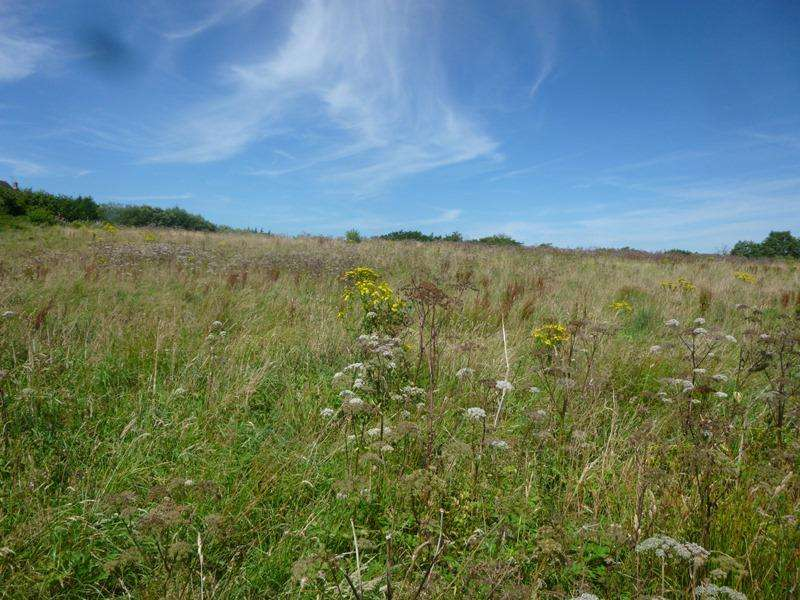 Land Commercial for sale in Bryn Coch Farm Paddocks, Tumble, Carmarthenshire SA14