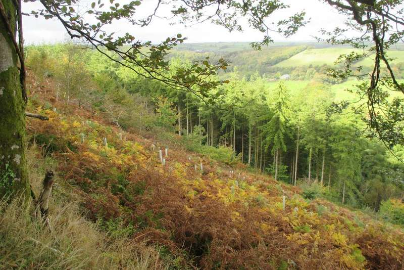 Land Commercial for sale in Woodland For Sale, Burley Wood, Watergate, Okehampton EX20