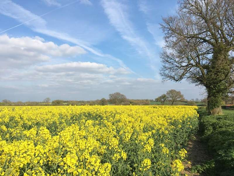 Land Commercial for sale in Woodton, Bungay