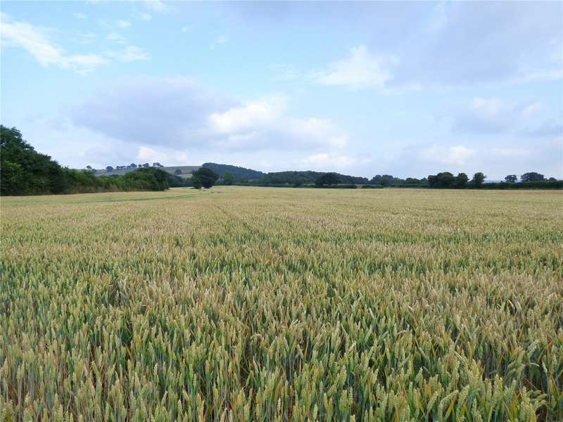 Land Commercial for sale in Thornford, Sherborne, Dorset, DT9
